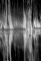tree, grove, cypress, light, shadow, shape, abstract