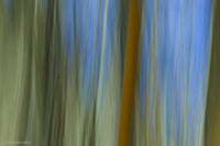 tree, grove, aspen, light, shadow, shape, abstract