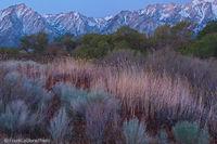 Sierra Grassland