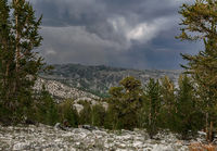 california, mountains, bristlecone, pine, forest, hiking, wilderness