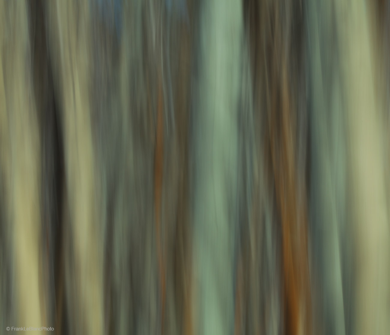 tree, grove, aspen, light, shadow, shape, abstract, photo