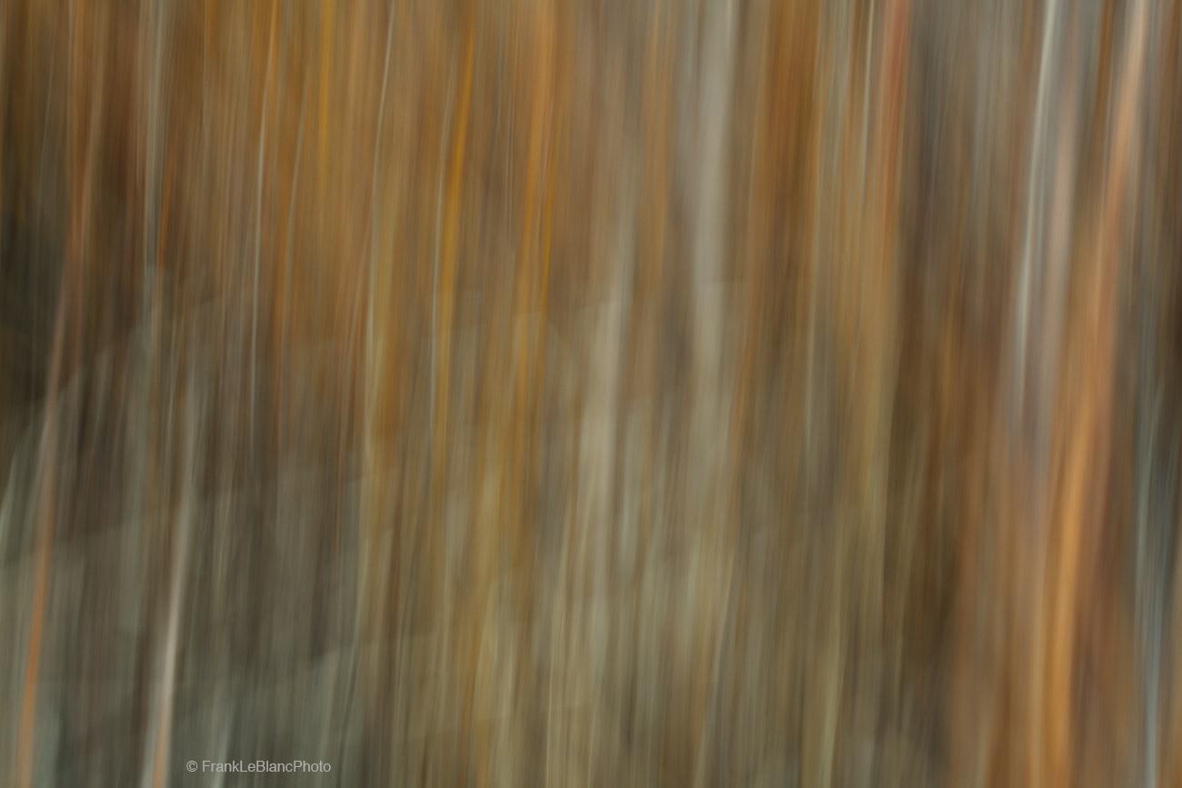 tree, grove, aspen, light, shadow, shapes, abstract, photo