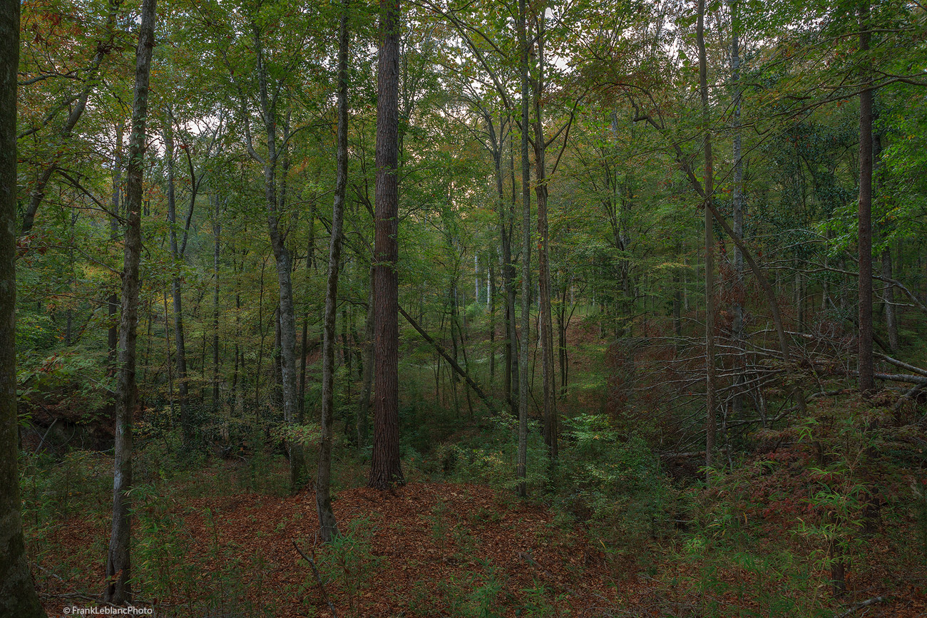 hills, tunica, forest, creek, natural, Mississippi, waterfall, beautiful, isolated, photo