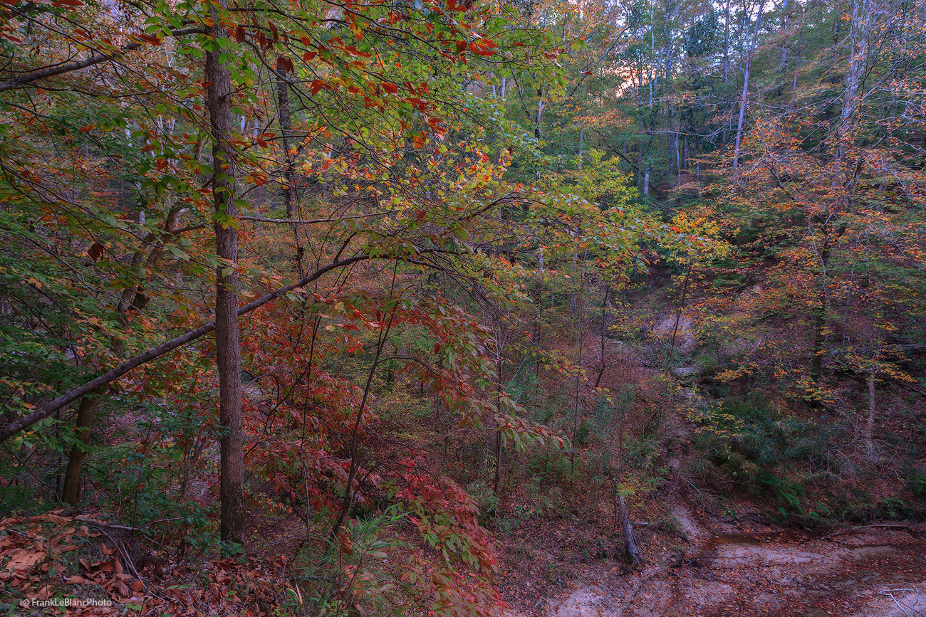 Sunset light appears through a distant gap in the forest of the Tunica Hills and illuminates the winter colors of red-orange...