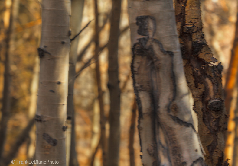 aspen, bishop, california, blur, light, color