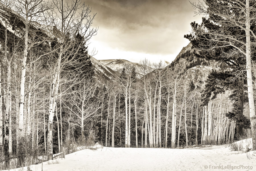 Aspen on Old Fall River road,route travelled by early visitors toRocky Mountain National Park in 1915, snow in late...