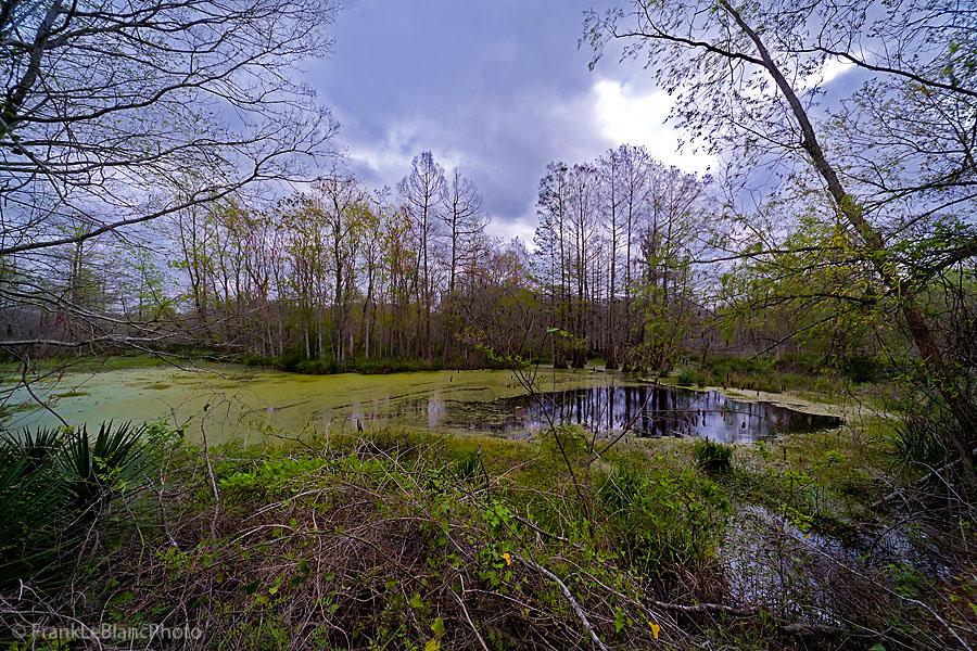 Bayou Tortue, Lake La Pointe, Louisiana, photo