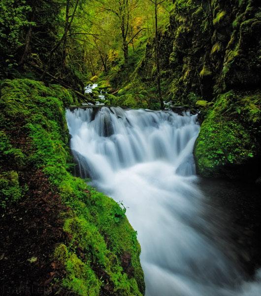 White water explodes through a gap of verdurous foliage.