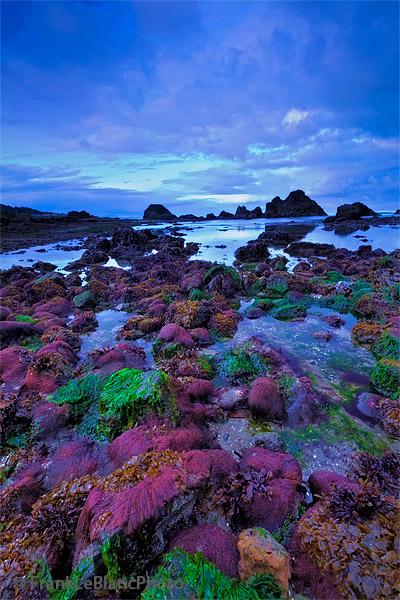 sea life, seal rocks, sunrise, photo