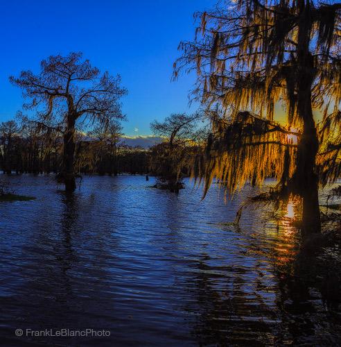 swamp, cypress, lake, sunset, moss, winter, february, atchafalaya, louisiana, trees, wind, water