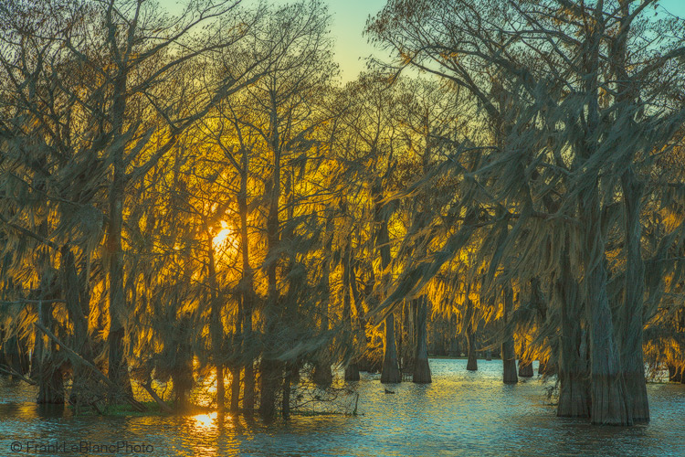 swamp, cypress, lake, sunset, moss, photo